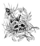 Skull and Weeds