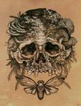 Skull with Cicada.