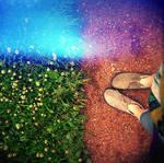 in summer park