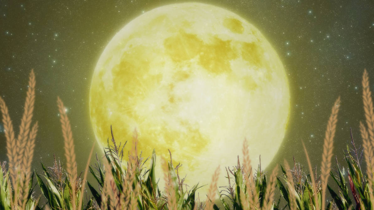 Corn Moon Wallpaper