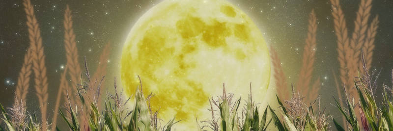 Corn Moon Twitter Header