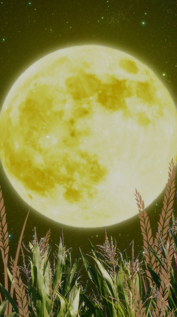 Corn Moon iphone wallpaper
