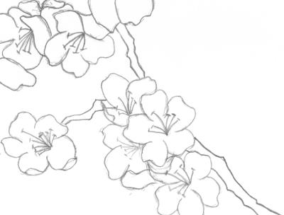 Japanese Cherry Blossoms (Black and White) by Super-Crazy-Weirdo