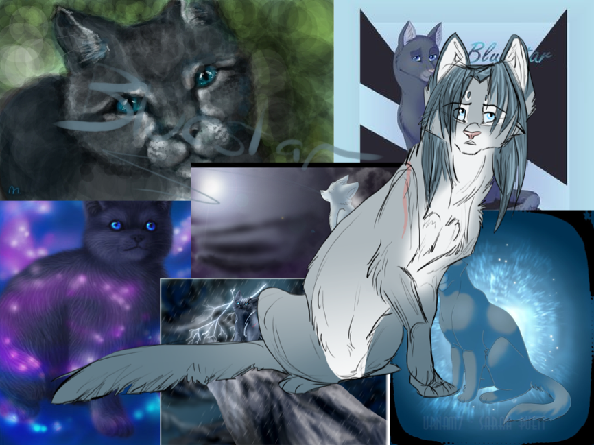 gallery for warrior cats wallpaper