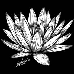 Lotus Tattoo Design by twovader