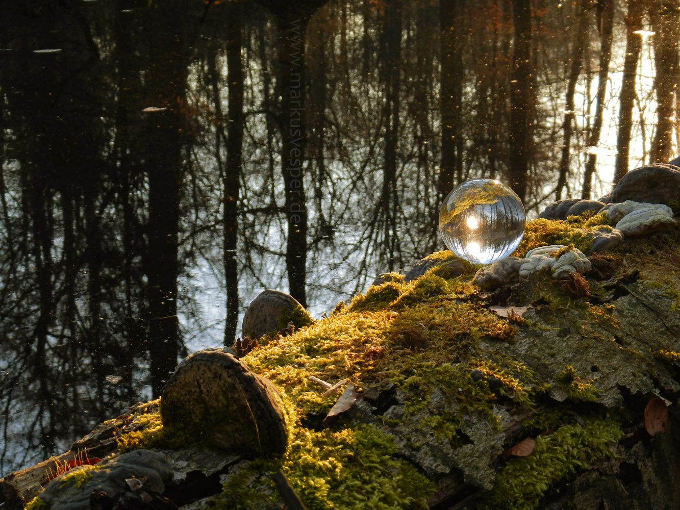Sphere on mossy fallen tree by Acrylicdreams
