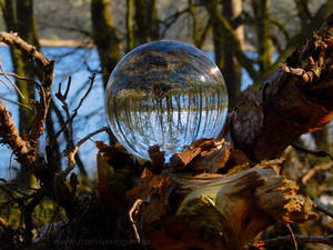 Glass sphere on branch at a lake