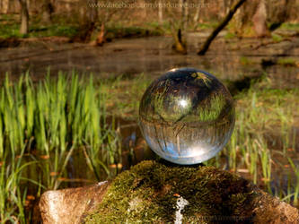 Glass sphere on moss besides a pond