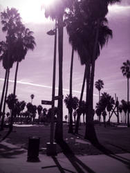 Venice Beach by naranch