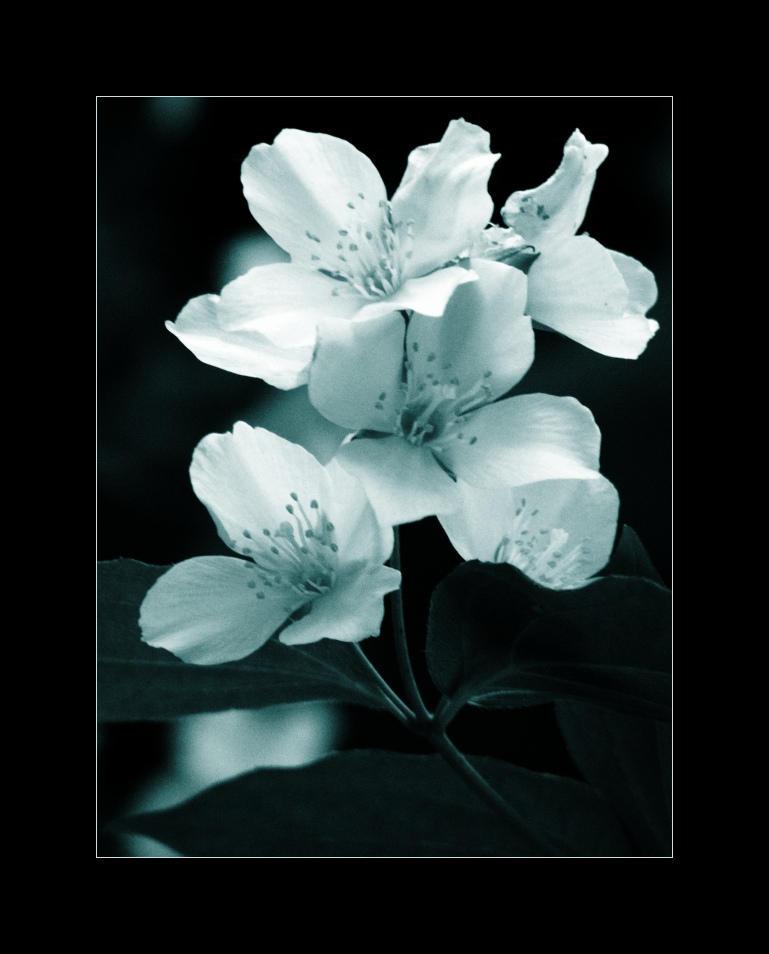 Petali del fiore by ioannicolae