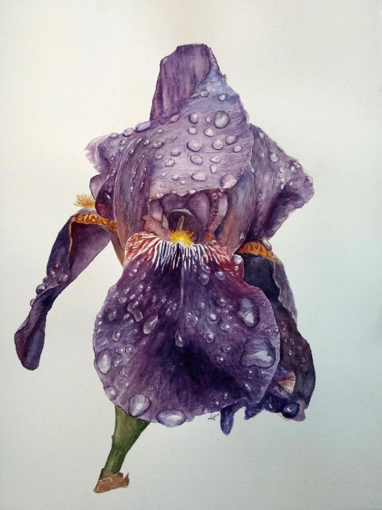 Blue Iris by FrozenPie22