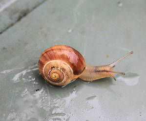 Unusual Snail