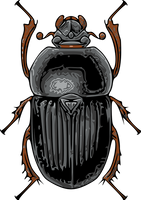 Beetle by ReSampled