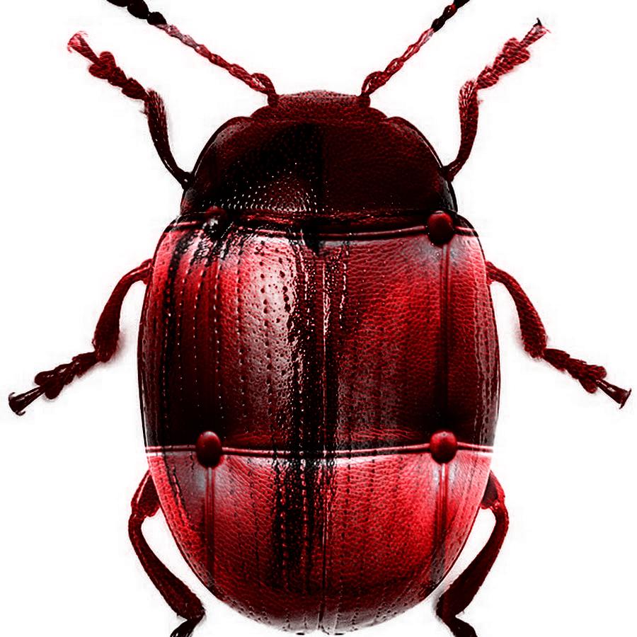 Bug L by ReSampled