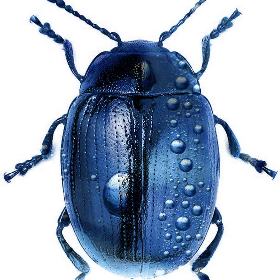 Bug Qwe by ReSampled
