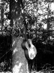 Gitara. by assassinatte
