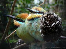More Kingfishers by kimu-sama