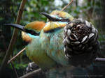 More Kingfishers