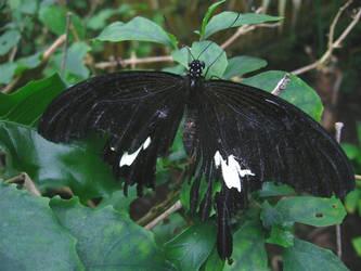 Broken butterfly by MrDooom