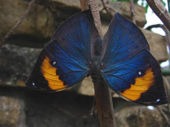 Colourful butterfly by MrDooom