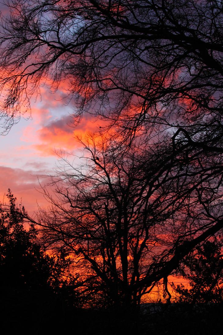 Red Sky In The Morning by RixResources