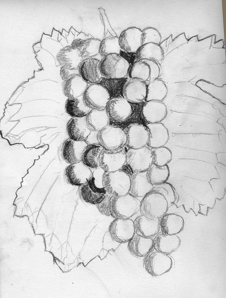 Grapes Pencil Drawing By RevelWood