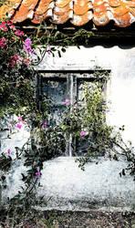 Summer window by mgot