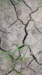 Texture Grass and Cracks 4
