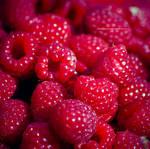 Bloodberries by emilianna12