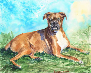 Boxer in the grass