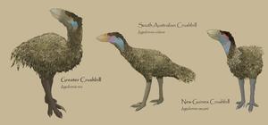 Crushbills by Sheather