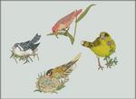 Birds of Serina - 10,000 Years PE