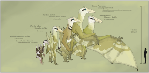 Emperor Swiftlet Variation by Sheather888