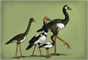 The King Geese
