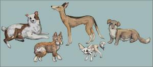 House Fox Diversity