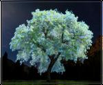 The Glow Tree by Sheather888