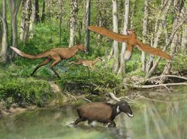 Sheatheria: Woodland Wildlife