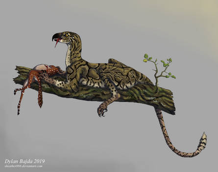 Gryphem reticulatus