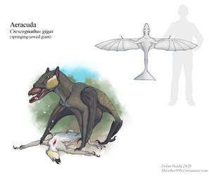 Aeracuda