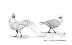 Creature design - Fowl by JeannieHarmon