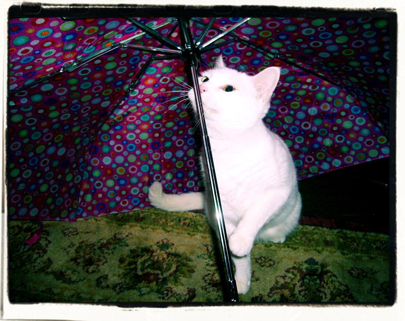 Raining Cats by JupiterLily