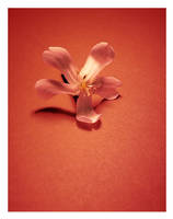 Fleur by JupiterLily