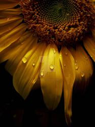 My Only Sunshine by JupiterLily