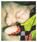 Shh, Lily's Asleep