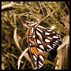 Butterfly Fly Away by JupiterLily