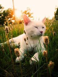 Kitty Dreams by JupiterLily