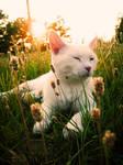 Kitty Dreams