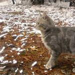 Snow Kitty II