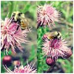 BumbleBees by JupiterLily
