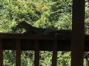 Squirrel on our porch